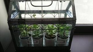 屋内,緑,花瓶,窓,植木鉢,観葉植物