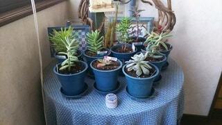 植木鉢,観葉植物,草木,ポット,ガーデン