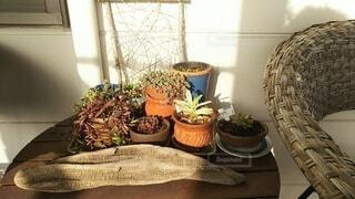花,屋内,テラス,植木鉢,観葉植物,アジアン,草木