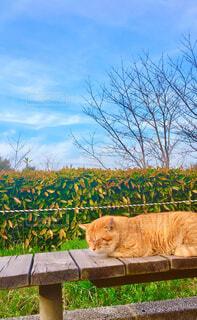 猫,空,動物,屋外,草