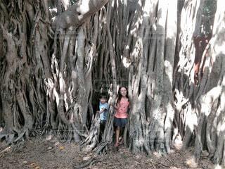 木の中でかくれんぼしようとする子供たちの写真・画像素材[4398137]