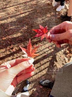 秋,紅葉,屋外,手,葉,もみじ,人物,人,地面