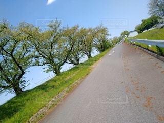 道路の脇の新緑の写真・画像素材[4410570]