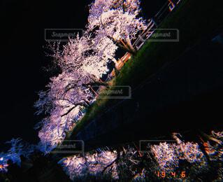 夜桜の写真・画像素材[4394236]