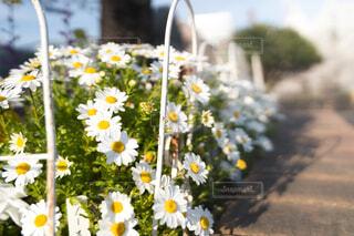 花のクローズアップの写真・画像素材[4393189]