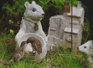 スズメの餌やりの写真・画像素材[4412050]
