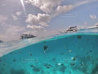 空水面水中の写真・画像素材[4412052]