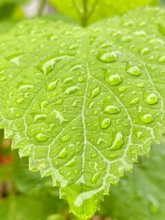 雨上がりの庭の写真・画像素材[4431580]
