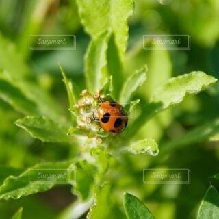 草にいるてんとう虫の写真・画像素材[4393263]