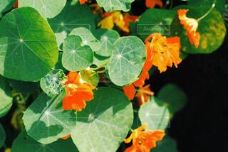 花と葉っぱが光って見えるの写真・画像素材[4394409]