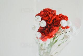赤いカーネーションの写真・画像素材[4396592]