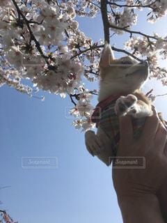 木の枝に、動物のぬいぐるみの写真・画像素材[1216878]