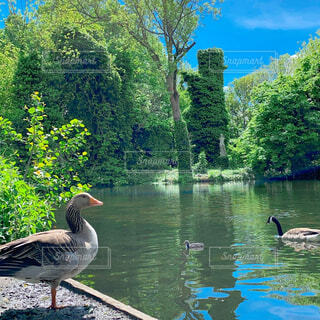 イギリスの公園にての写真・画像素材[4438048]