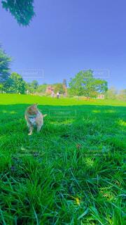 木陰でのんびりの猫ちゃんの写真・画像素材[4575935]