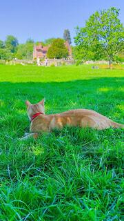日陰の芝生でひとやすみの写真・画像素材[4582877]