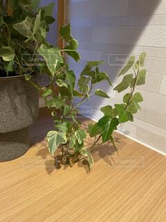 カウンター上の観葉植物の写真・画像素材[4397495]
