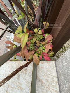 玄関先に植物をの写真・画像素材[4397493]
