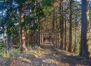 森の中の木の写真・画像素材[4397023]