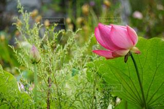 植物の上のピンクの花の写真・画像素材[4397410]