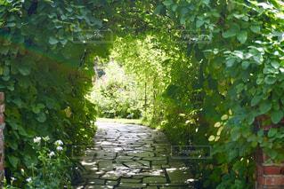 庭の木の写真・画像素材[4397412]