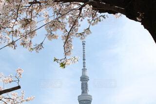 スカイツリーと桜の写真・画像素材[4398620]