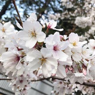 近くの花のアップの写真・画像素材[1933846]
