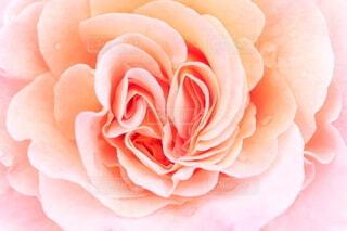 バラの中のハートの写真・画像素材[4400657]