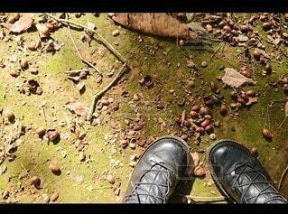 どんぐり山へお散歩への写真・画像素材[4407125]