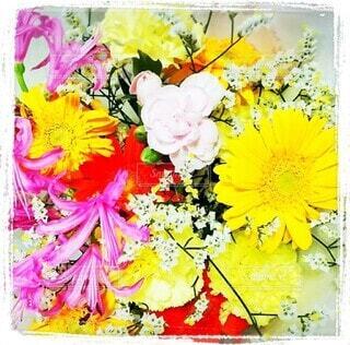 花のクローズアップの写真・画像素材[4418099]