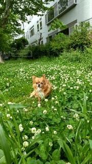 庭の犬の写真・画像素材[4404633]