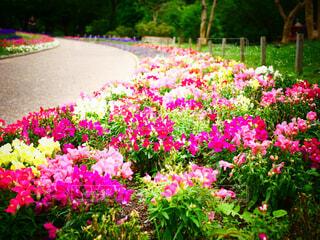 花園のクローズアップの写真・画像素材[4402090]