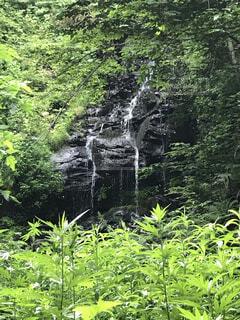 自然と滝の写真・画像素材[4405032]