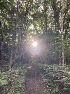 太陽リングの写真・画像素材[4405215]