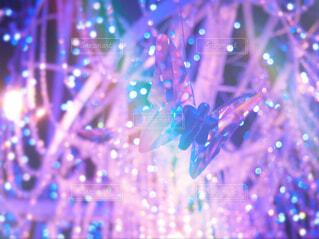 光る蝶々の写真・画像素材[4404459]