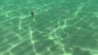 海,夏,ファミリー,海水浴,水面,泳ぐ,水中,日本海,アクア,イカ,塩水