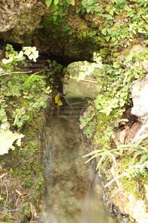 緑の水路の写真・画像素材[4414994]