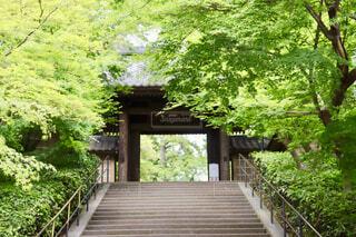 新緑の円覚寺の写真・画像素材[4408570]