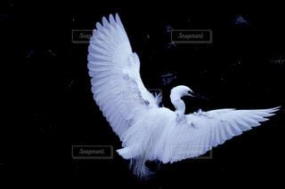 小鷺のダンスの写真・画像素材[4413715]