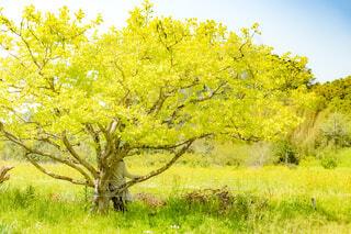 春の木陰の写真・画像素材[4410283]