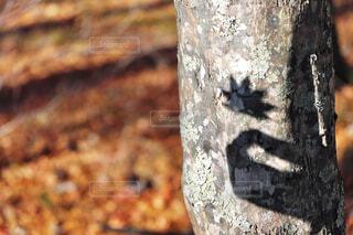 小さい秋、見つけた。の写真・画像素材[4436397]