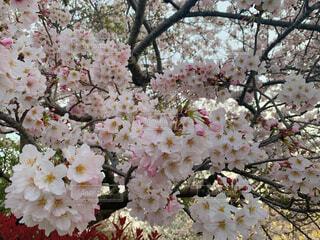 花のクローズアップの写真・画像素材[4408751]