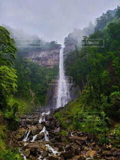 霧に包まれる初夏の新緑の写真・画像素材[4412722]
