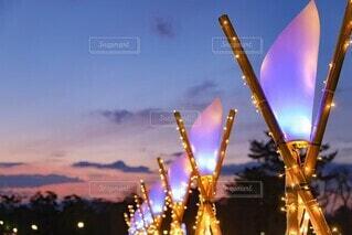 夕焼けとライトアップの写真・画像素材[4413171]