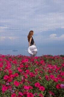 お花畑と青空の写真・画像素材[4416416]