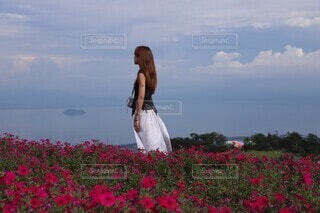 青空とお花畑の写真・画像素材[4416417]