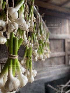 収穫したニンニクの乾燥の写真・画像素材[4411770]