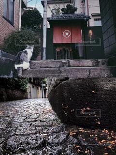 雨の日 神楽坂の猫の写真・画像素材[4412840]