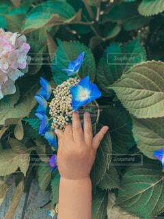 花と子どもの手の写真・画像素材[4446523]