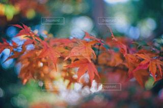 秋の色の写真・画像素材[4414070]