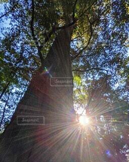 木のクローズアップの写真・画像素材[4414240]